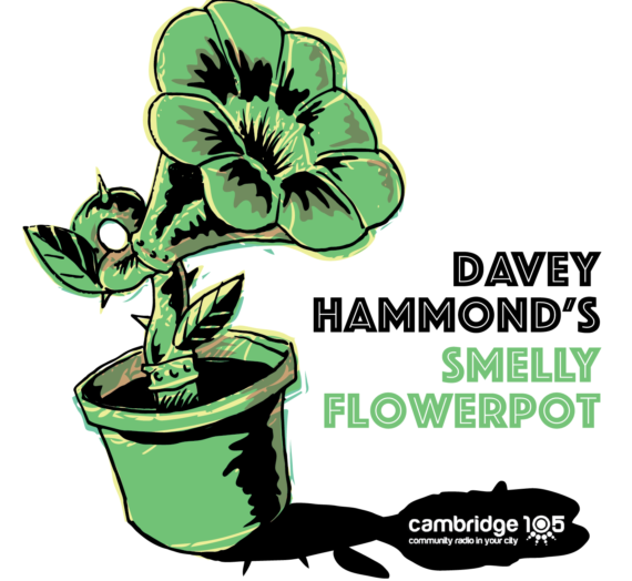Album Review – Dave Hammond